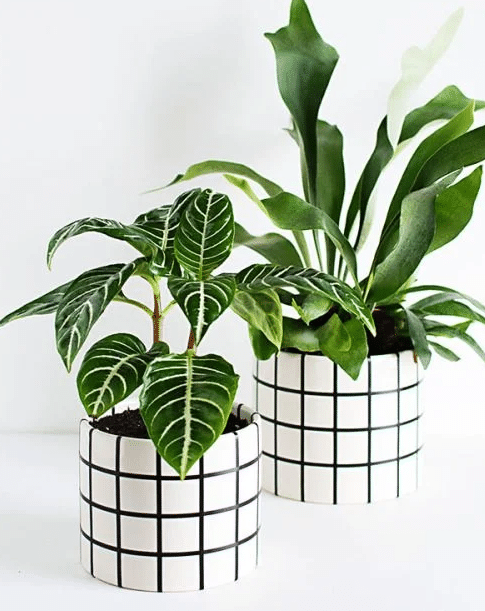 10 different pots to take care of your plants