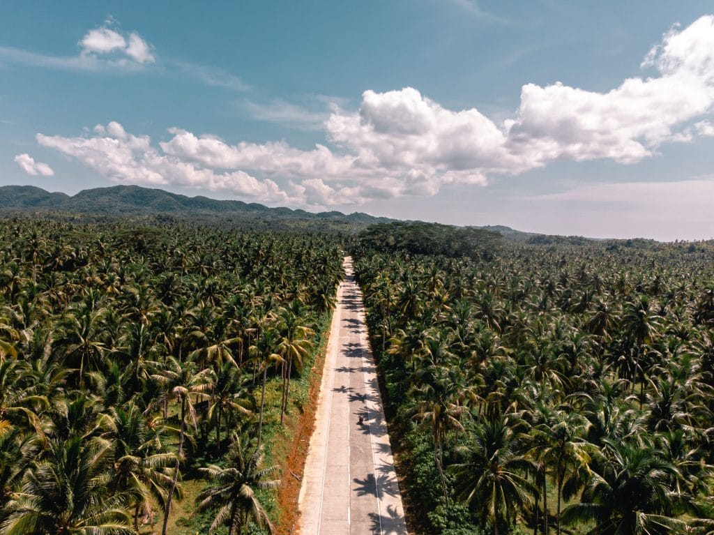 Landscape with a person riding a motorcycle in a road with palmtrees in Siargao, Philippines.