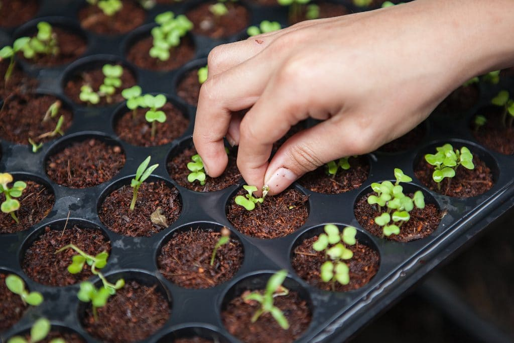All about how to sow the seeds in a simple way